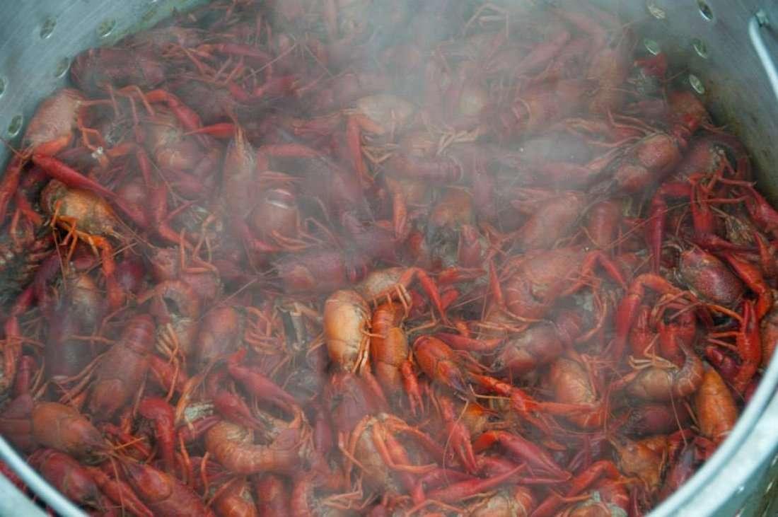 7th Annual Crawfish Festival