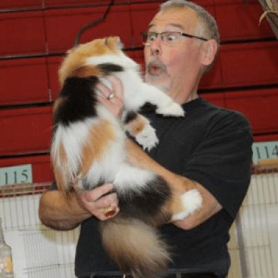 CAT SHOW  JULY 29 &amp 30 2017