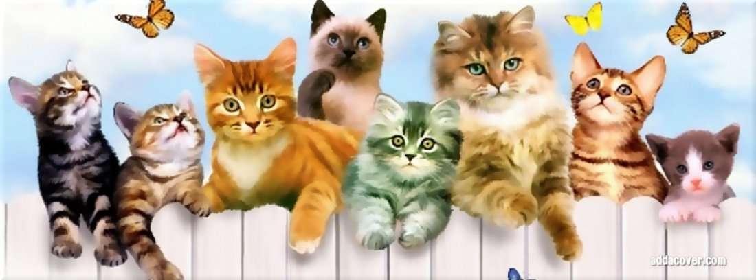 Magnolia State Cat Club Show