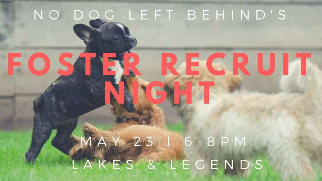 No Dog Left Behind Foster Recruit Night