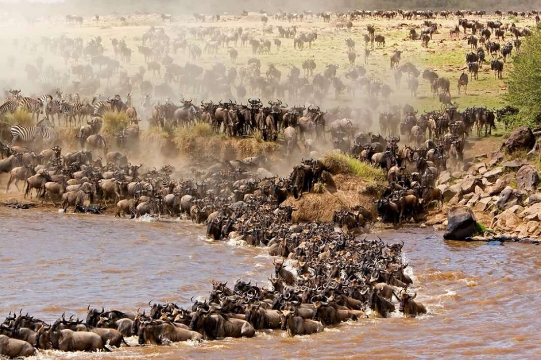 2 Days Masai Mara Kenya budget safari tour package