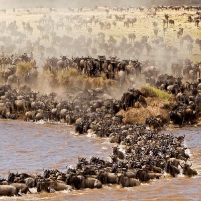 2 Days Masai Mara Kenya budget safari tour package