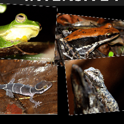 Intensive Field Herpetology in Western Ghats 13 to 15 July 2018