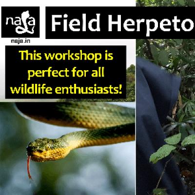 Field Herpetology - Silvassa