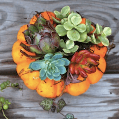 Mini Succulent Pumpkin Workshop
