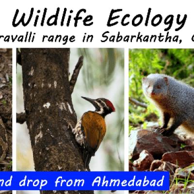 Field Workshop on Wildlife Ecology