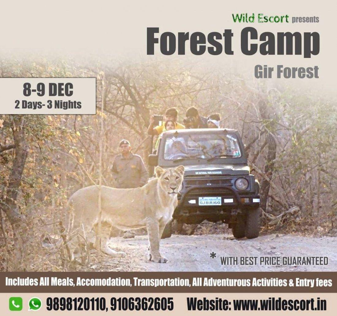 Gir Forest Camp