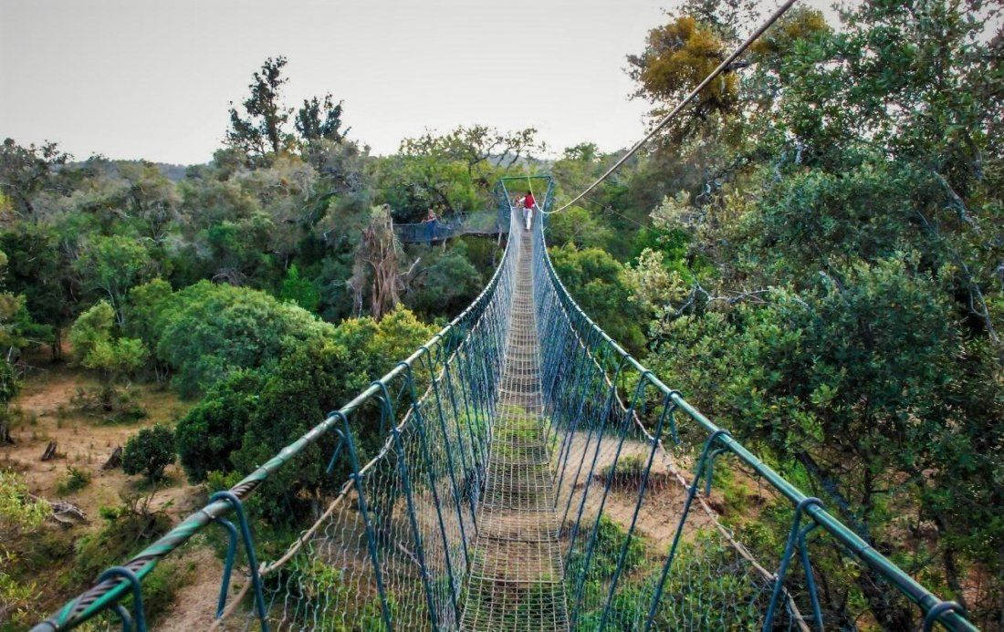 Ngare Ndare Forest Hike Day Trip