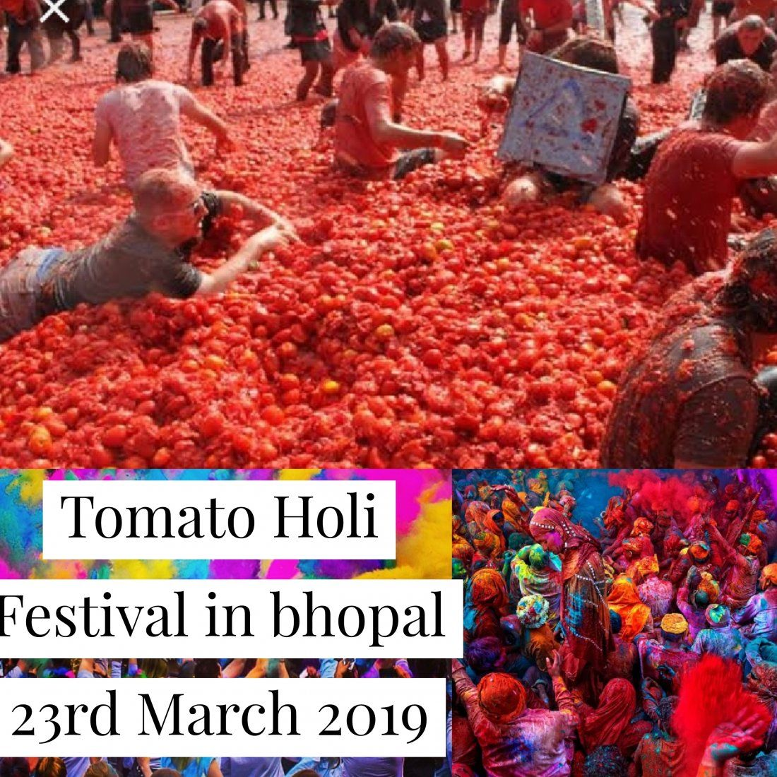 Tomato Holi Festival