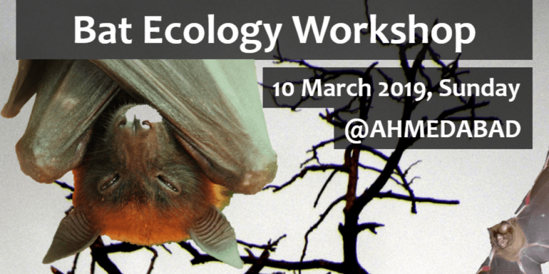 Bat Ecology Workshop