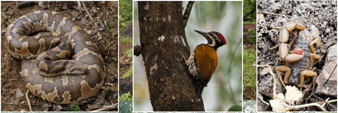 Field Herpetology & Wildlife Ecology Workshop