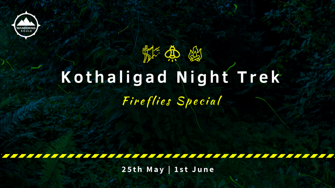 Kothaligad Fireflies Special