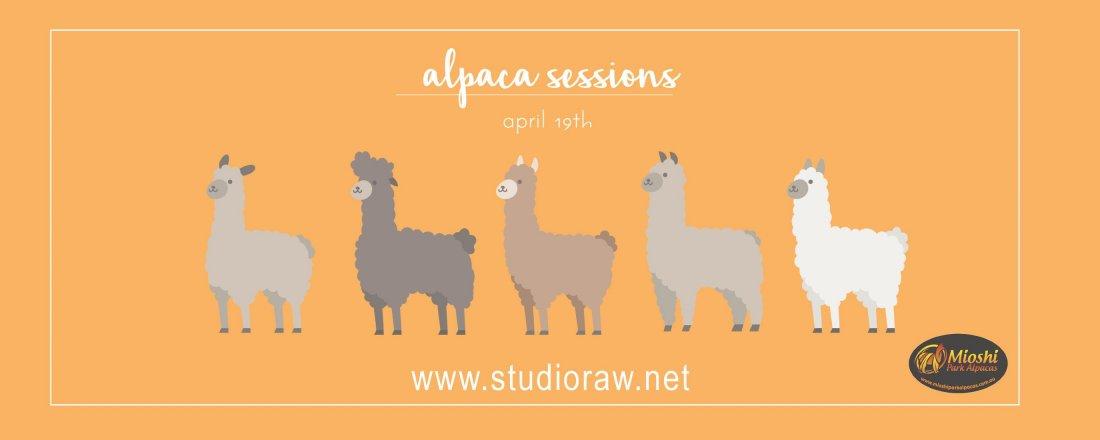 Alpaca Photo Sessions