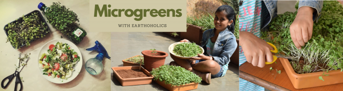 Online: Microgreens workshop | Online Event | AllEvents.in