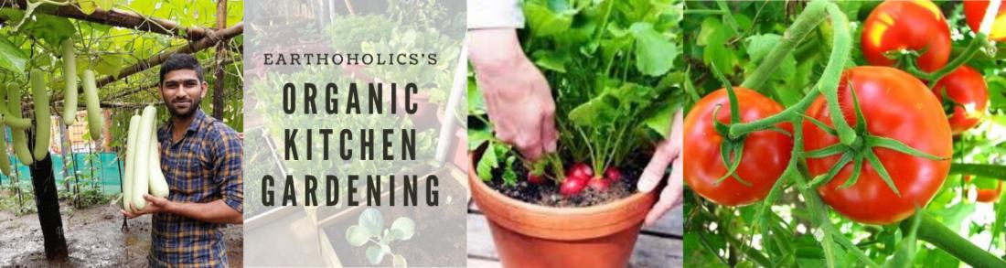 Online: Organic kitchen gardening | Online Event | AllEvents.in