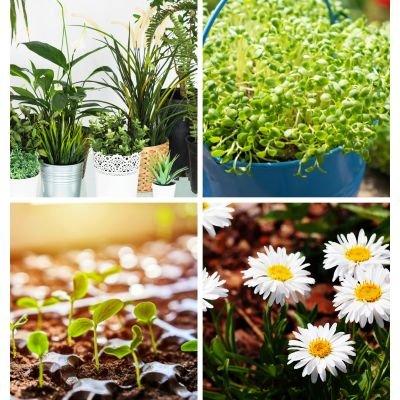 Online Home Gardening Workshop (In Hindi)