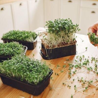 Online Microgreens workshop