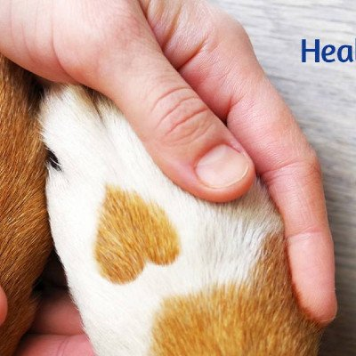 Healing Touch for Animals EARLY BIRD REGISTRATION ENDS THIS WEEKEND