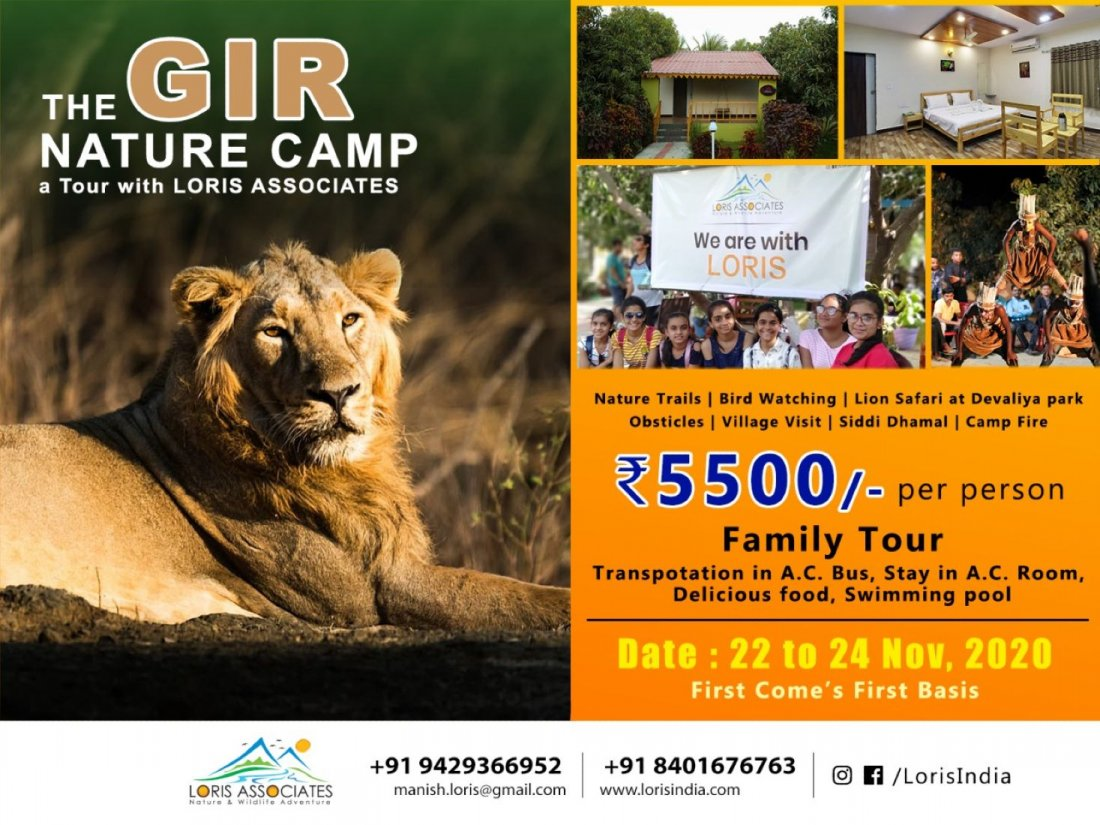 Gir Lion Sanctuary Family Camp - 2020 | Event in Junagadh | AllEvents.in