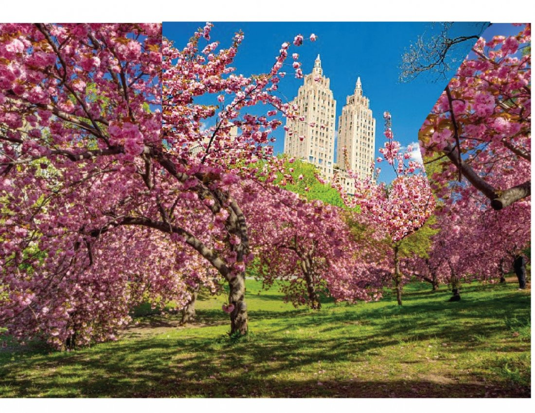 HOW TO WATERCOLOR - A Beautiful Landscape Cherry Blossoms | Online Event | AllEvents.in
