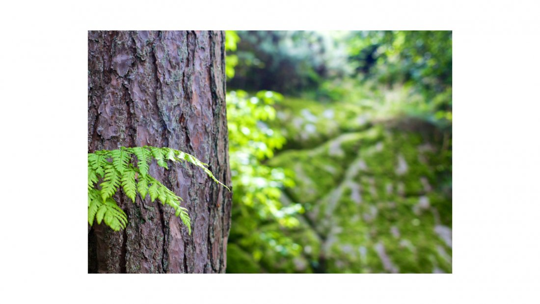 Mindfulness forest experience, 3 September | Event in Braintree | AllEvents.in