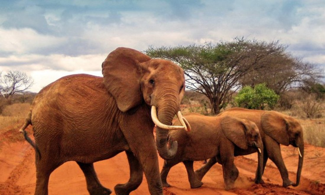 1 DAY TSAVO EAST FROM MOMBASA/DIANI, 30 October | Event in Mombasa | AllEvents.in